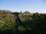 The grape vineyard with several varieties being grown for seed.