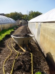 Compost is filled into the trench dug out along the side of the hoophouse to keep it warm in the winter.